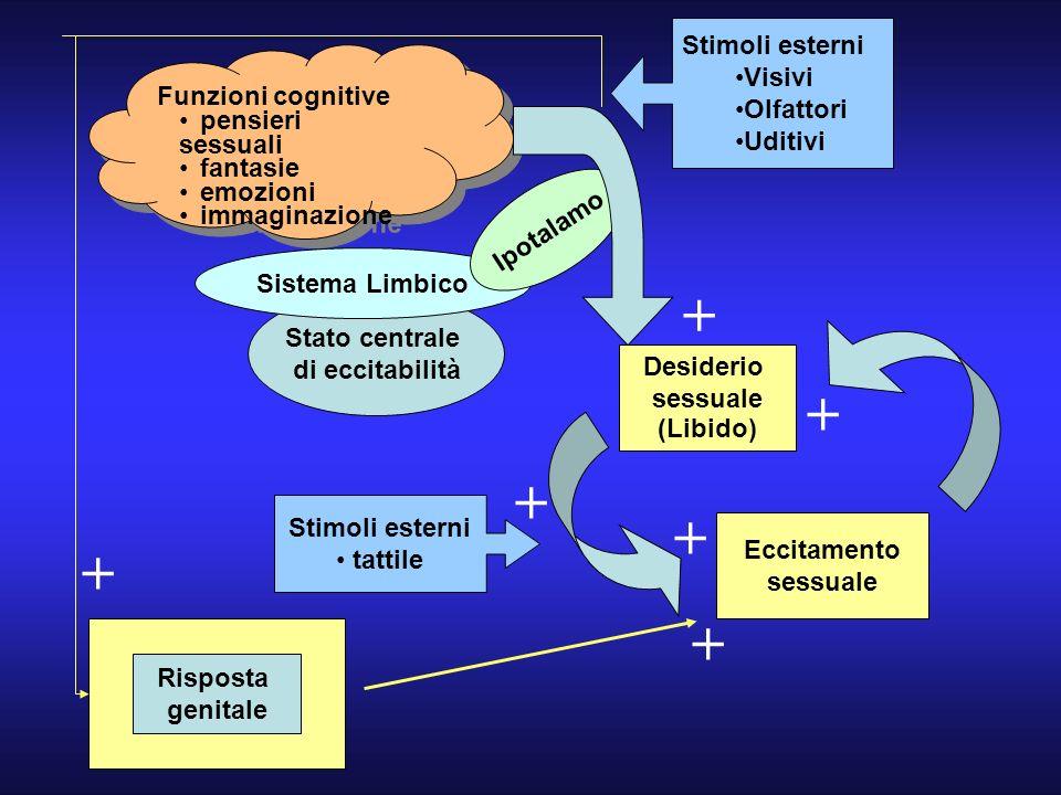 + + + + + + Stimoli esterni Visivi Olfattori Funzioni cognitive