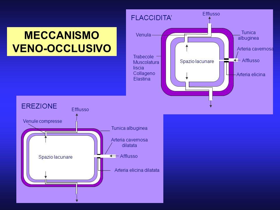 MECCANISMO VENO-OCCLUSIVO