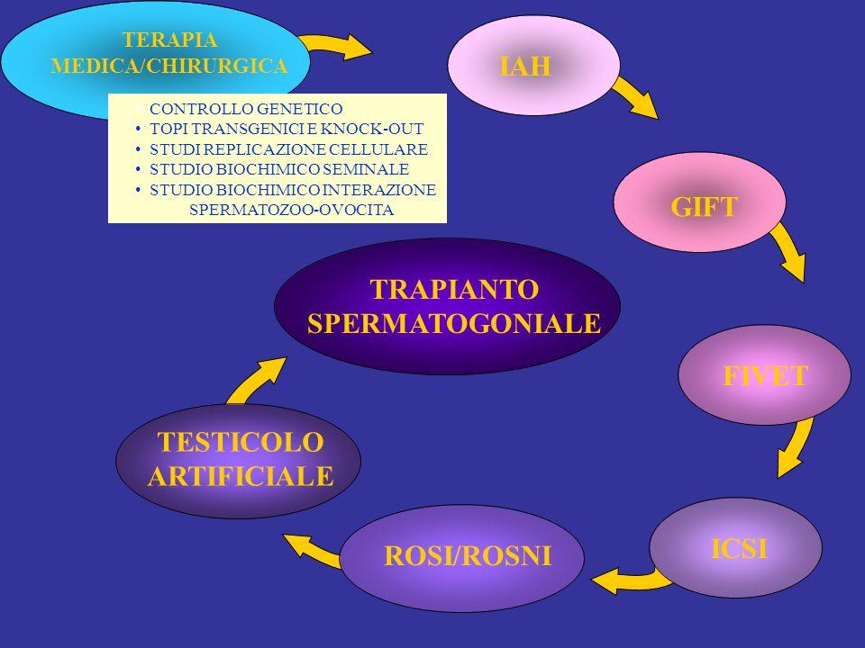 TRAPIANTO SPERMATOGONIALE TESTICOLO ARTIFICIALE