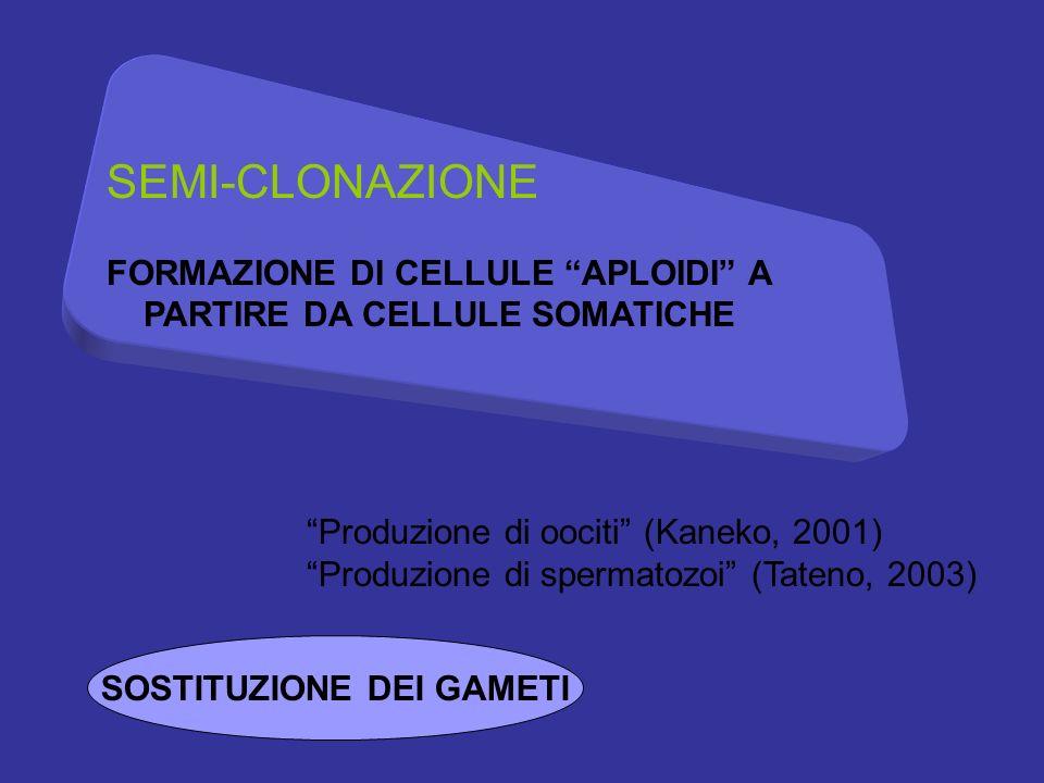 SEMI-CLONAZIONE FORMAZIONE DI CELLULE APLOIDI A PARTIRE DA CELLULE SOMATICHE. Produzione di oociti (Kaneko, 2001)