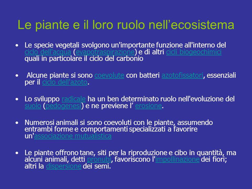 Le piante e il loro ruolo nell'ecosistema