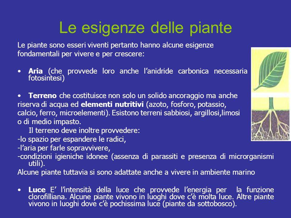 Le esigenze delle piante