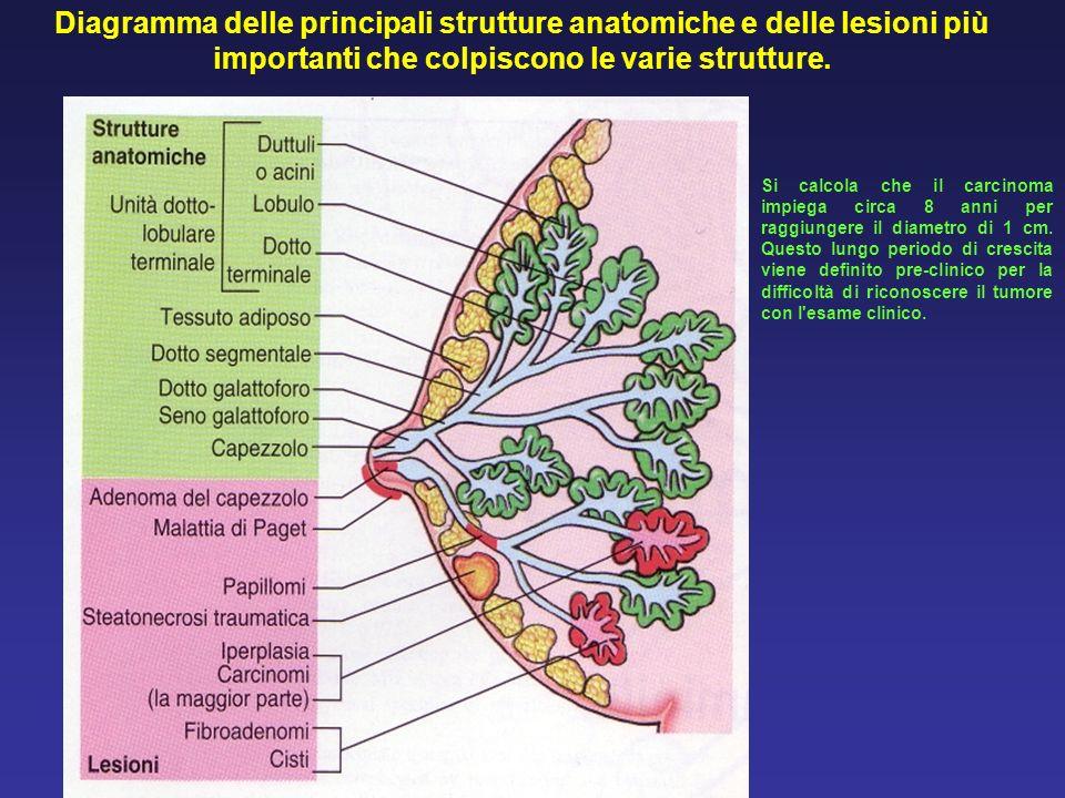 Diagramma delle principali strutture anatomiche e delle lesioni più importanti che colpiscono le varie strutture.