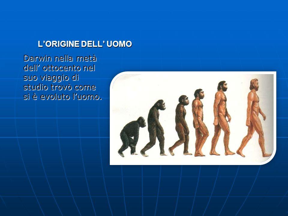L'ORIGINE DELL' UOMO Darwin nella metà dell' ottocento nel suo viaggio di studio trovò come si è evoluto l'uomo.
