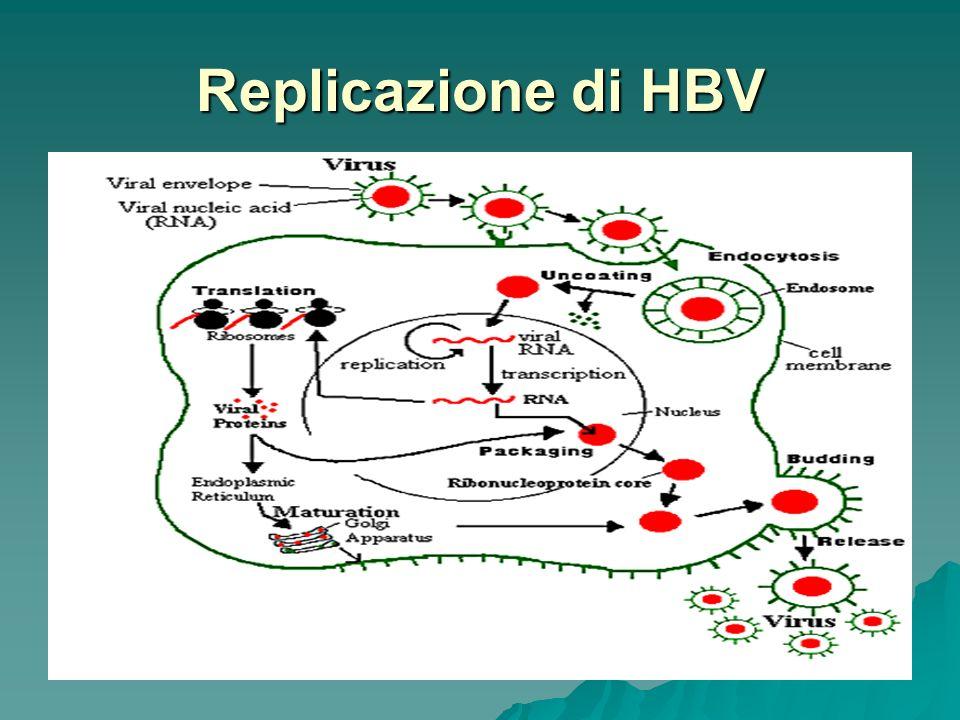 Replicazione di HBV
