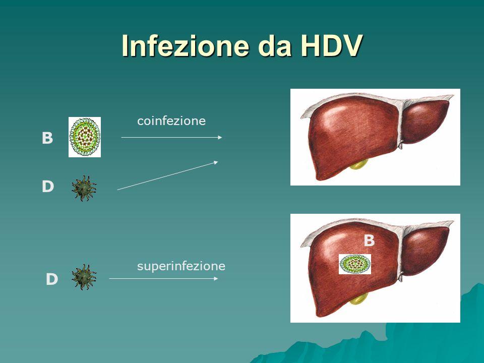 Infezione da HDV coinfezione B D B superinfezione D