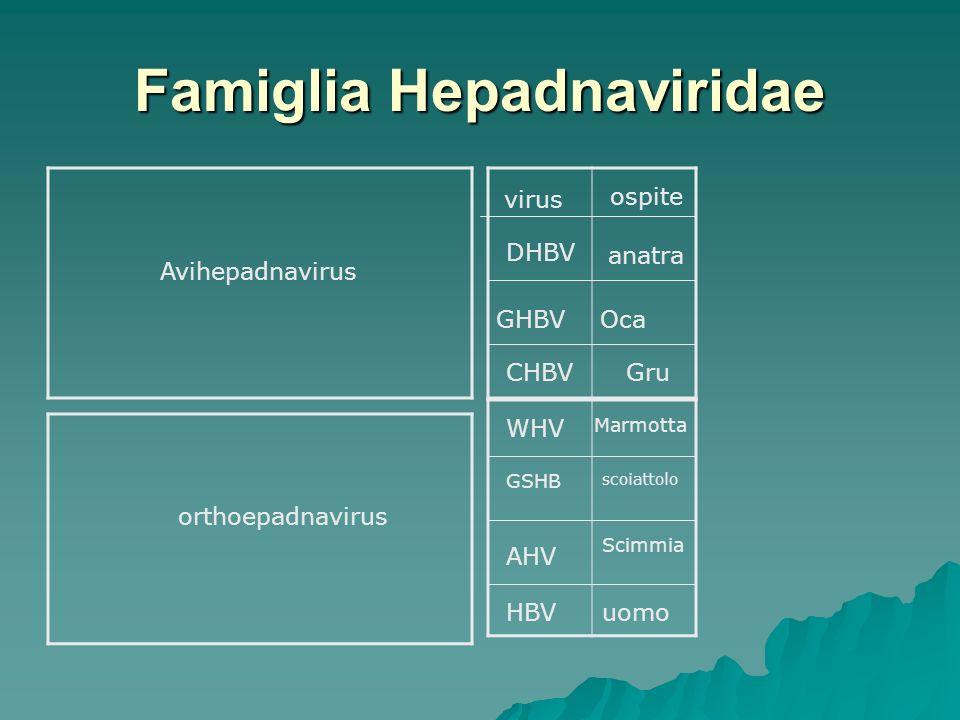 Famiglia Hepadnaviridae