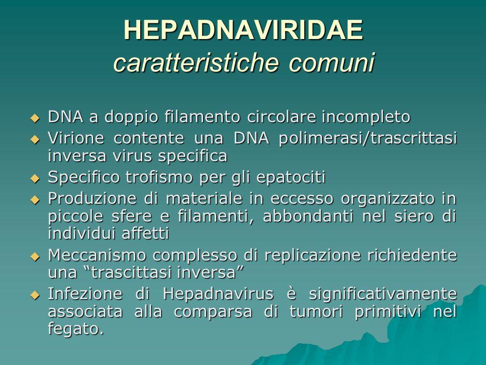 HEPADNAVIRIDAE caratteristiche comuni