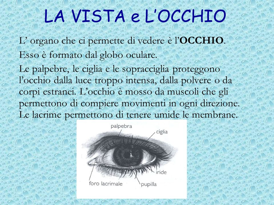 LA VISTA e L'OCCHIO L' organo che ci permette di vedere è l'OCCHIO.