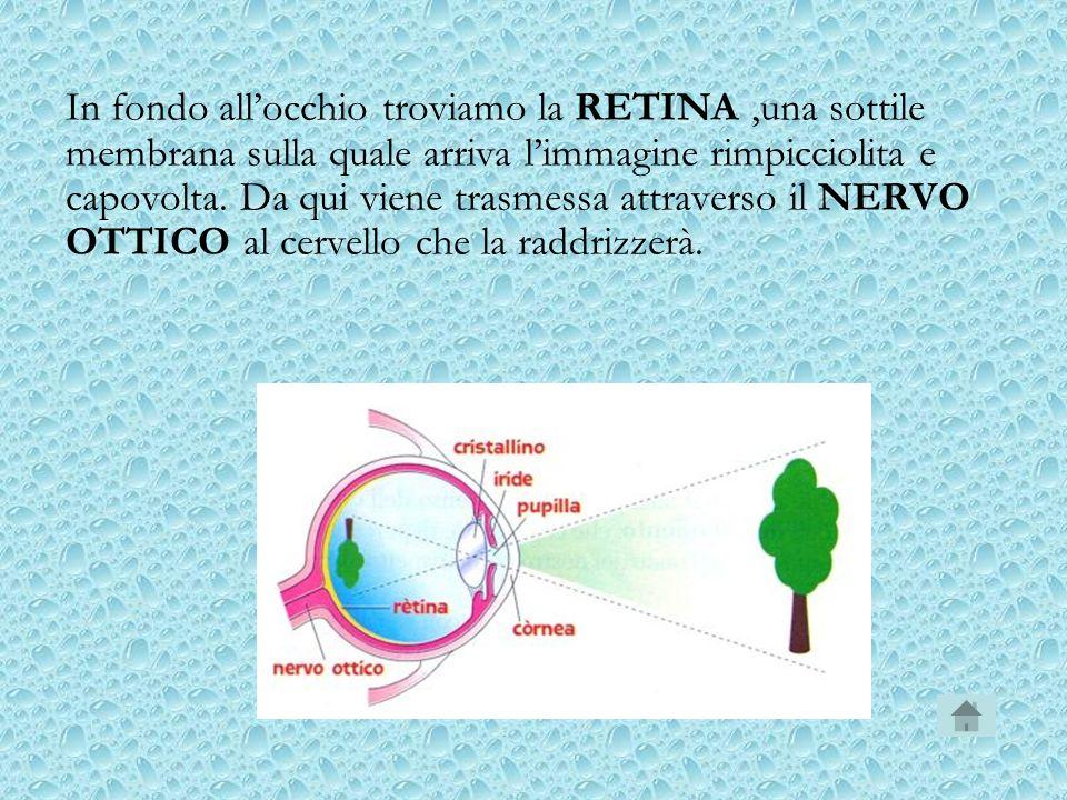 In fondo all'occhio troviamo la RETINA ,una sottile membrana sulla quale arriva l'immagine rimpicciolita e capovolta.