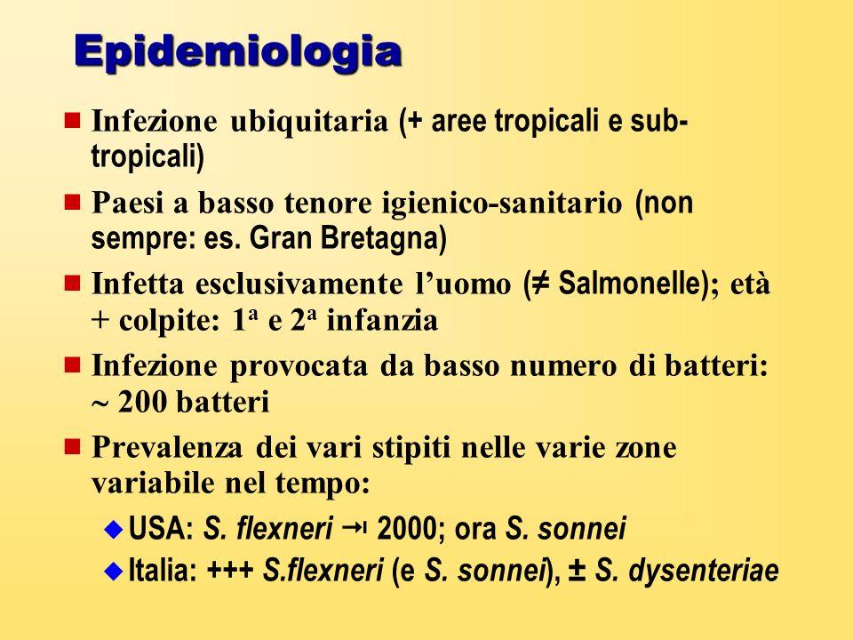 Epidemiologia Infezione ubiquitaria (+ aree tropicali e sub-tropicali)