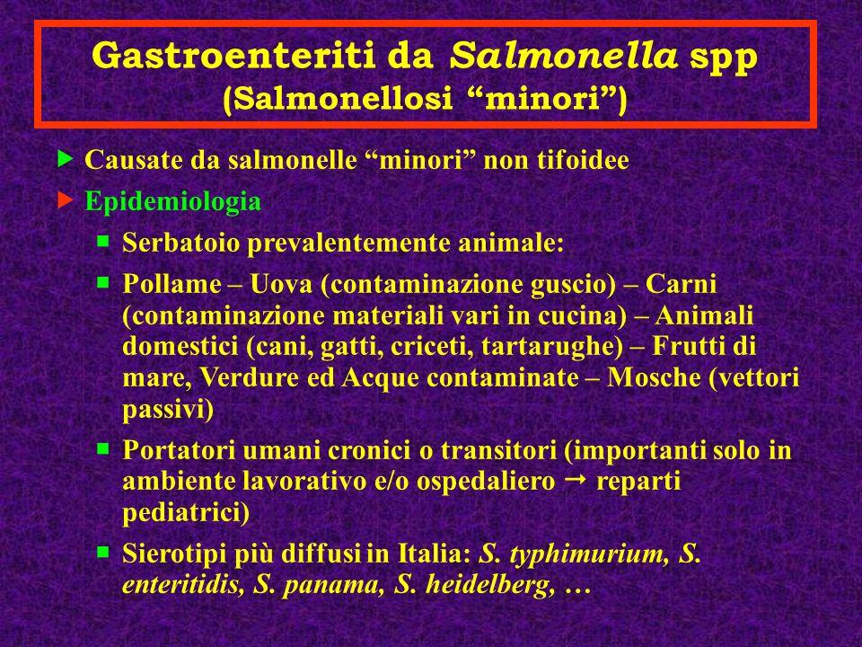 Gastroenteriti da Salmonella spp (Salmonellosi minori )