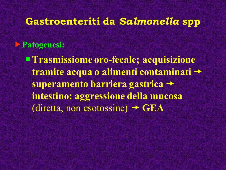 Gastroenteriti da Salmonella spp