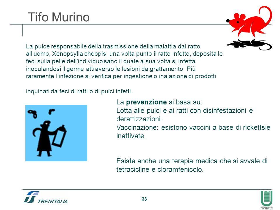 Tifo Murino La prevenzione si basa su: