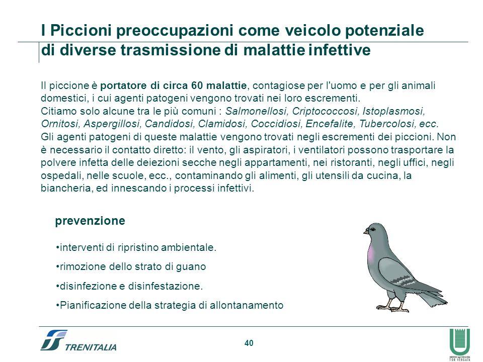 I Piccioni preoccupazioni come veicolo potenziale di diverse trasmissione di malattie infettive