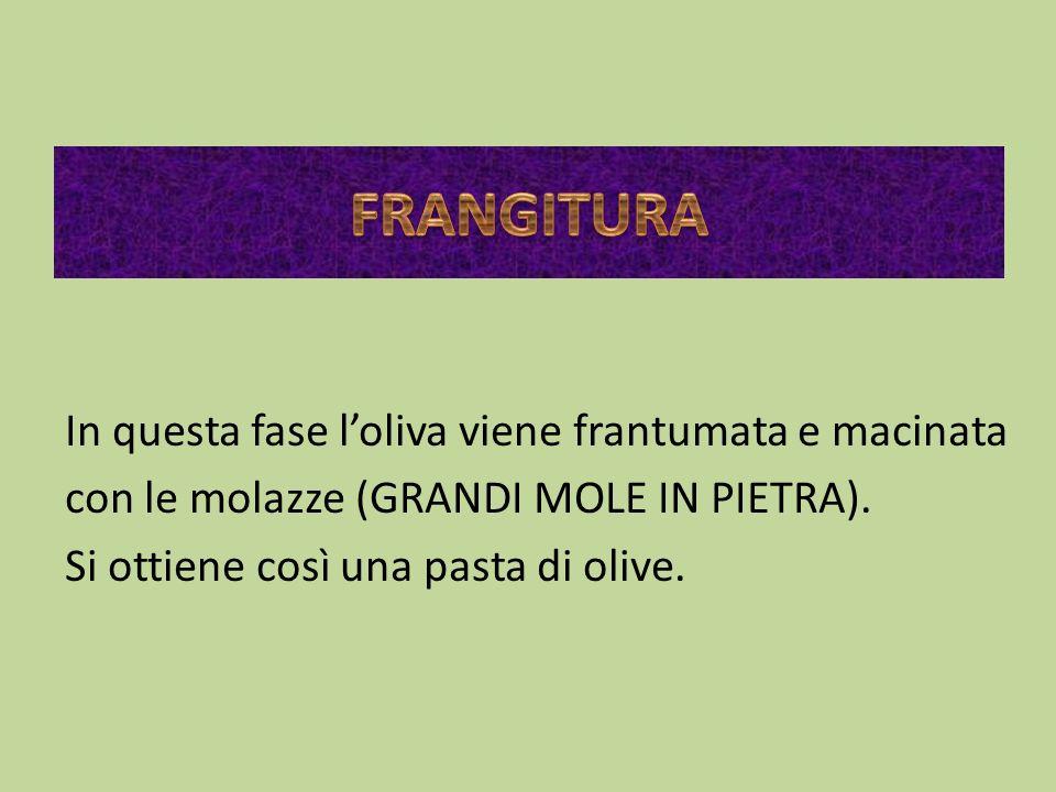 FRANGITURA In questa fase l'oliva viene frantumata e macinata con le molazze (GRANDI MOLE IN PIETRA).