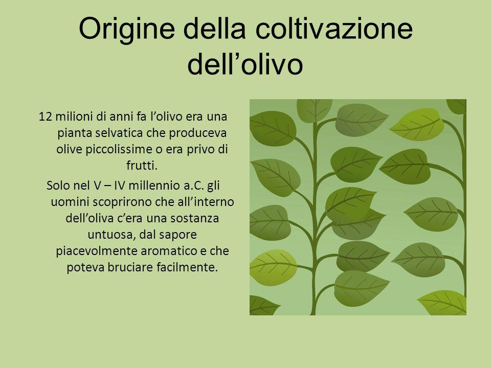 Origine della coltivazione dell'olivo