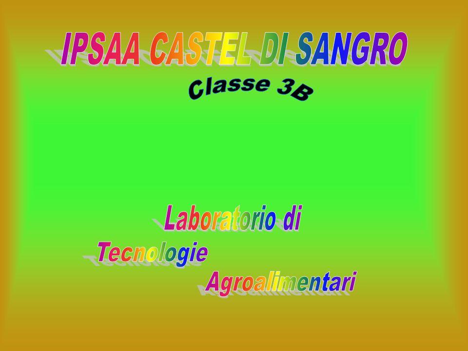 IPSAA CASTEL DI SANGRO Classe 3B Laboratorio di Tecnologie