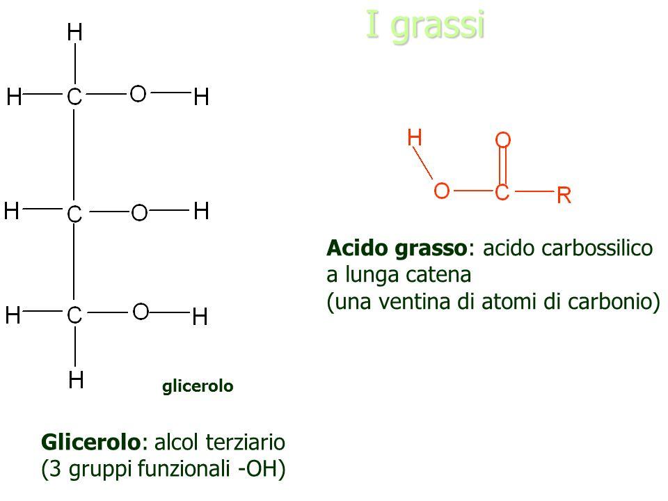 I grassi Acido grasso: acido carbossilico a lunga catena