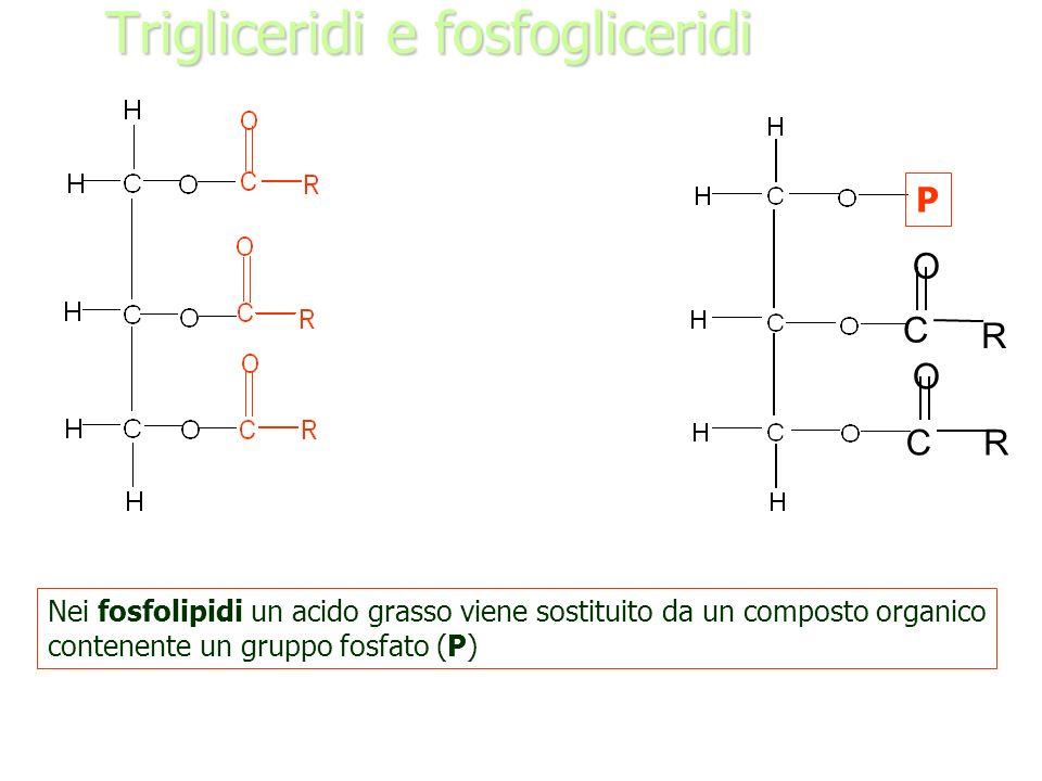 Trigliceridi e fosfogliceridi