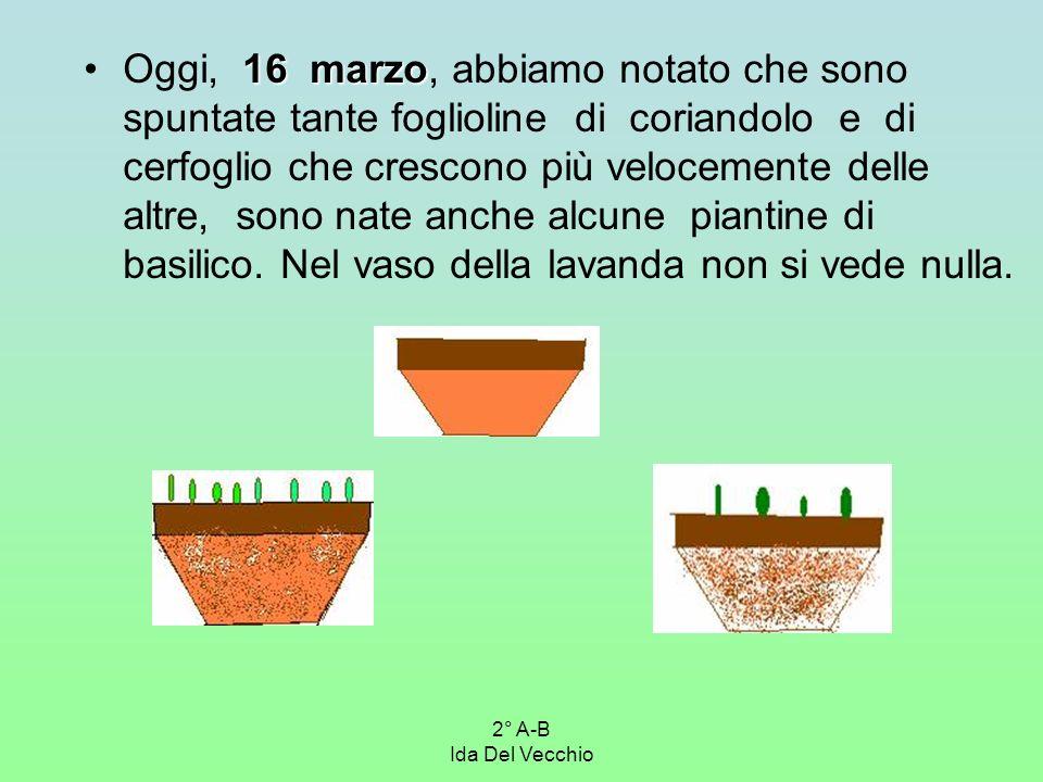 Oggi, 16 marzo, abbiamo notato che sono spuntate tante foglioline di coriandolo e di cerfoglio che crescono più velocemente delle altre, sono nate anche alcune piantine di basilico. Nel vaso della lavanda non si vede nulla.