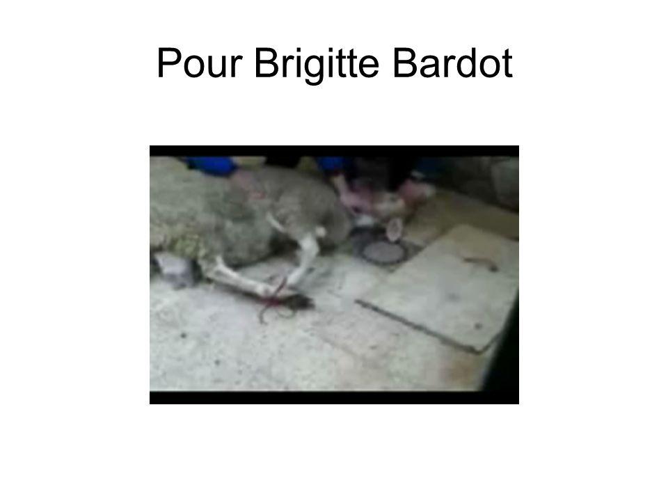 Pour Brigitte Bardot