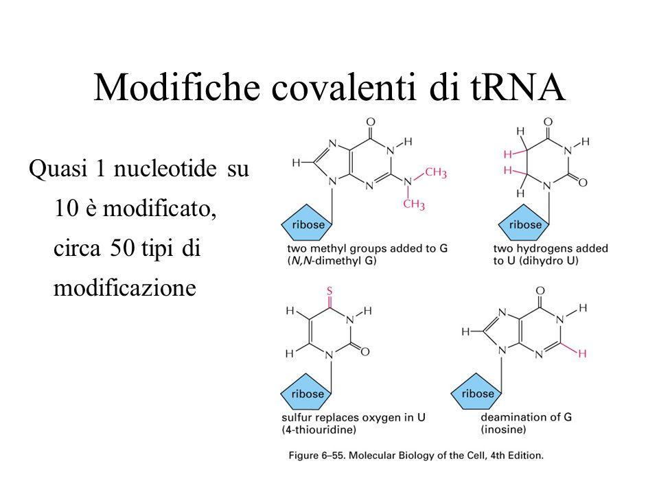 Modifiche covalenti di tRNA
