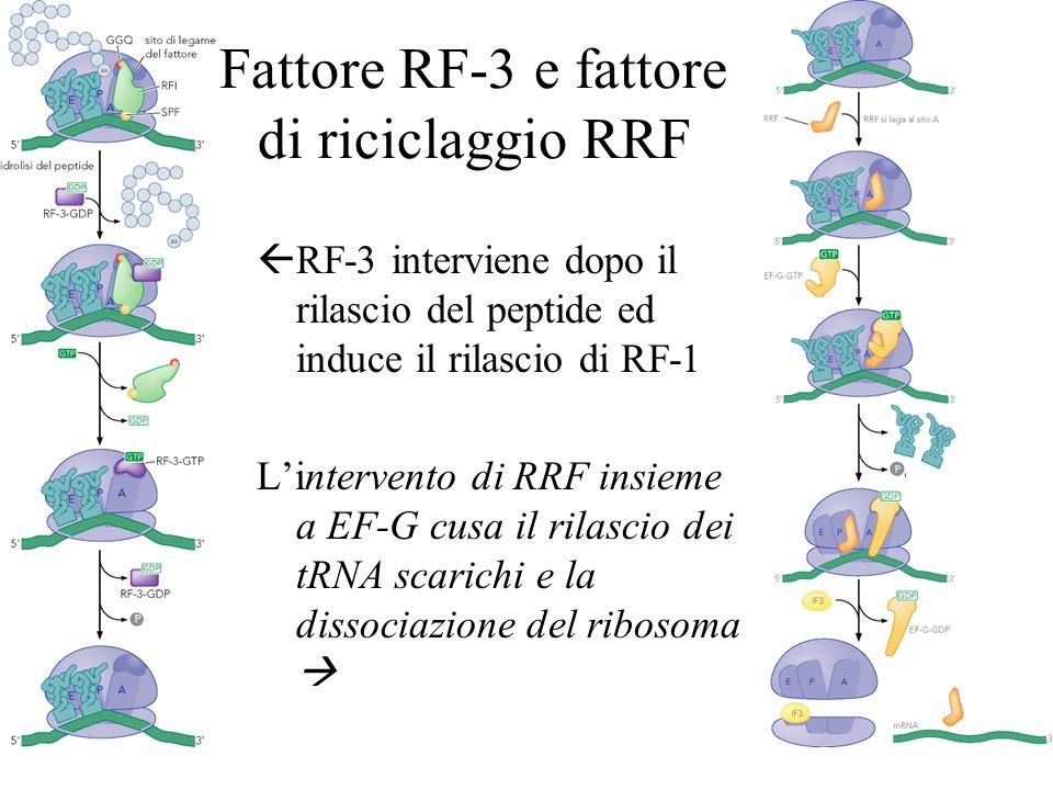 Fattore RF-3 e fattore di riciclaggio RRF