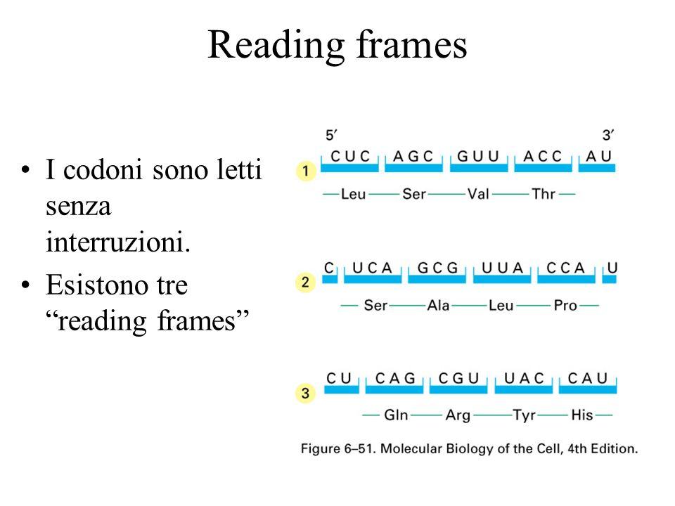 Reading frames I codoni sono letti senza interruzioni.