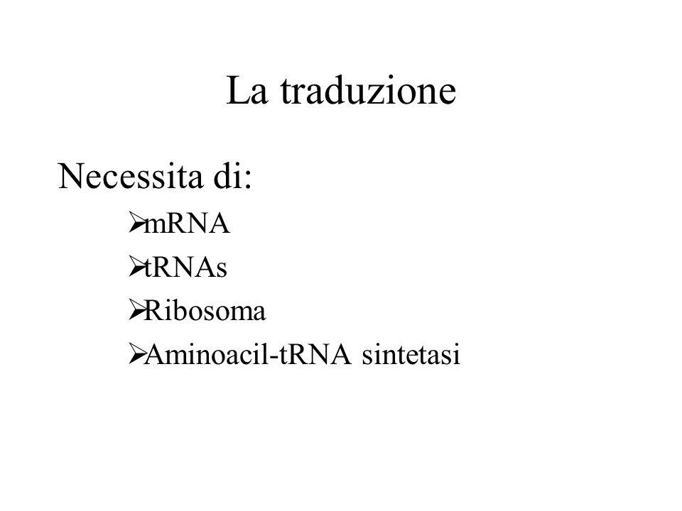 La traduzione Necessita di: mRNA tRNAs Ribosoma
