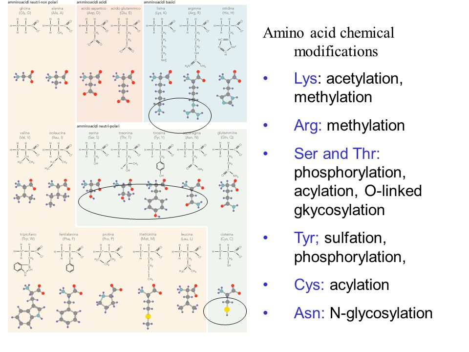 Amino acid chemical modifications