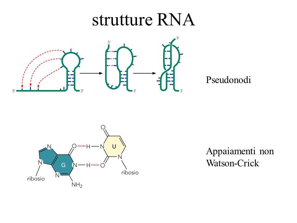 strutture RNA Pseudonodi Appaiamenti non Watson-Crick