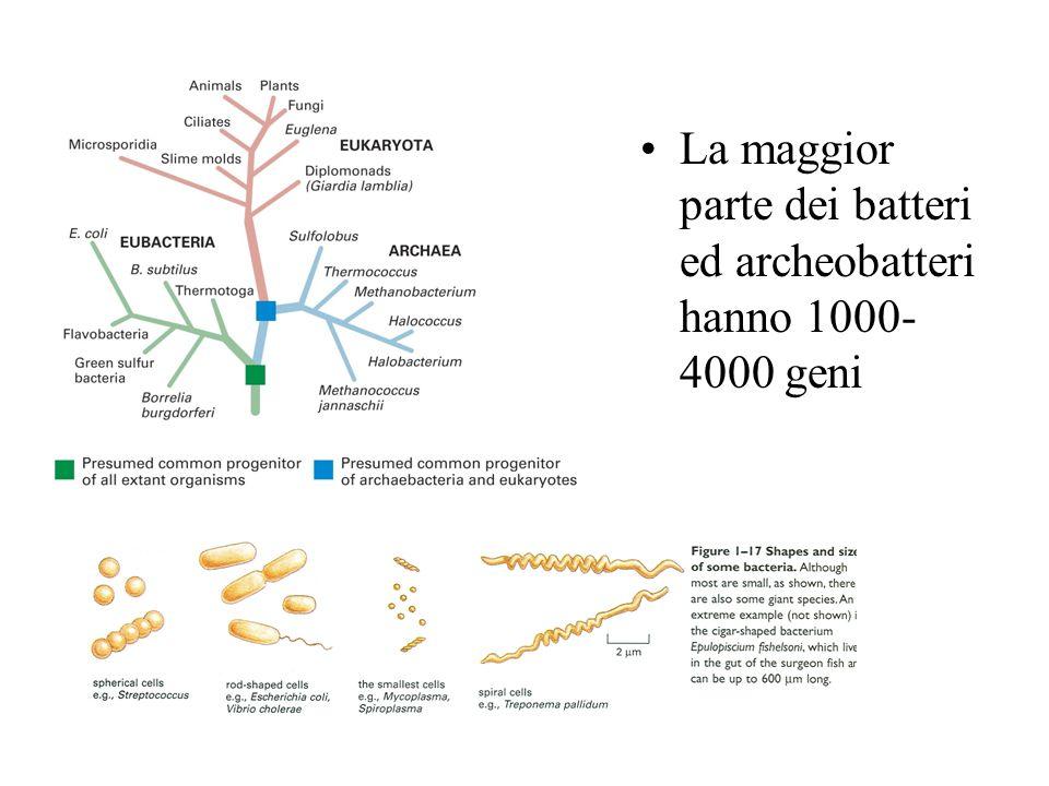 La maggior parte dei batteri ed archeobatteri hanno 1000-4000 geni