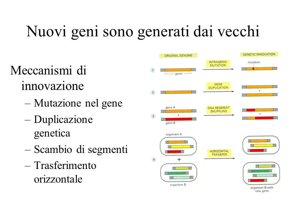 Nuovi geni sono generati dai vecchi