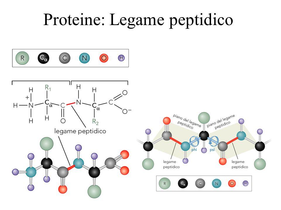 Proteine: Legame peptidico