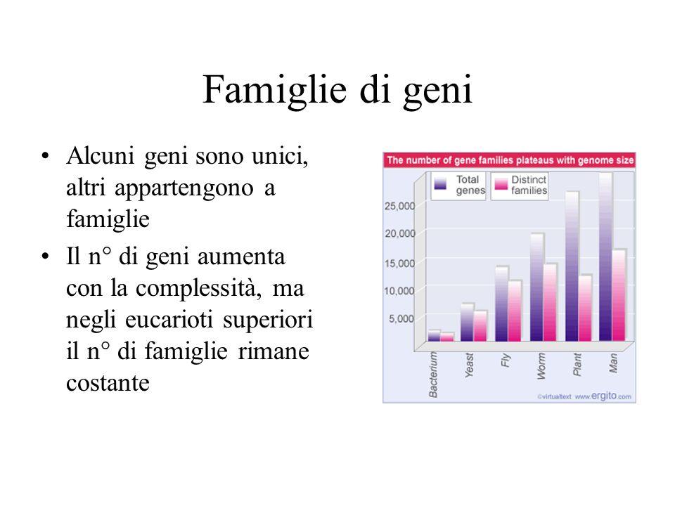 Famiglie di geni Alcuni geni sono unici, altri appartengono a famiglie