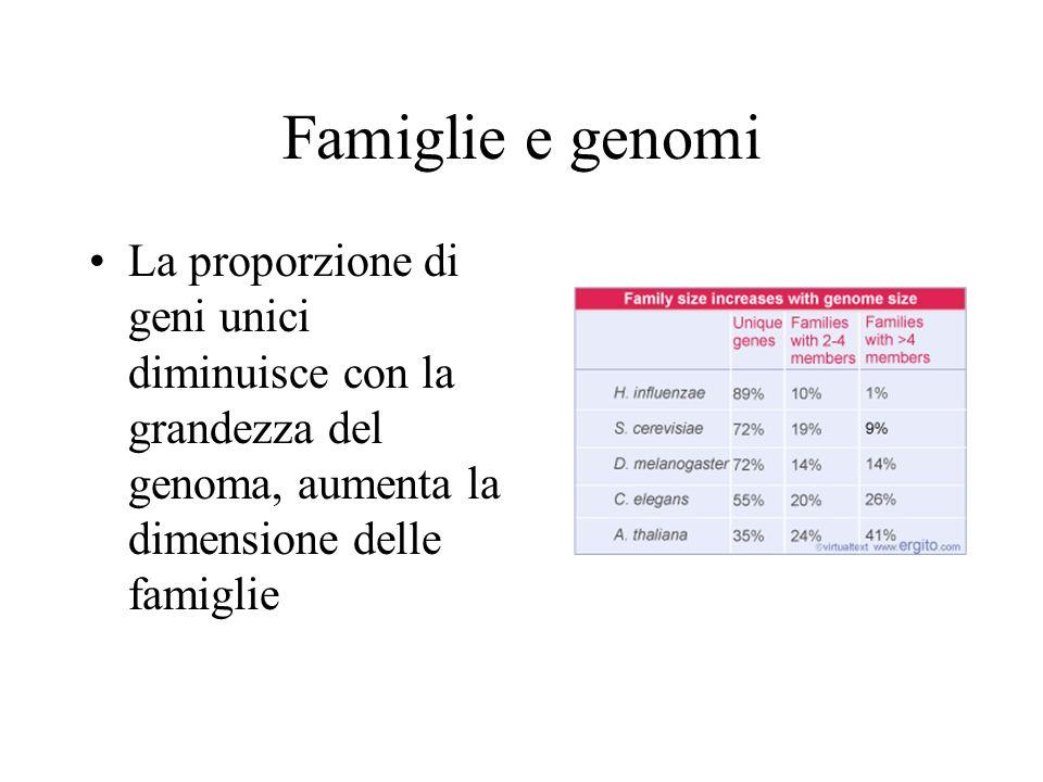 Famiglie e genomi La proporzione di geni unici diminuisce con la grandezza del genoma, aumenta la dimensione delle famiglie.