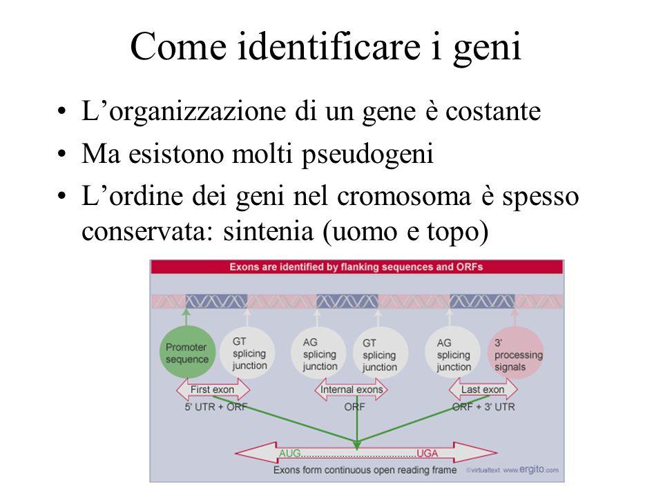 Come identificare i geni