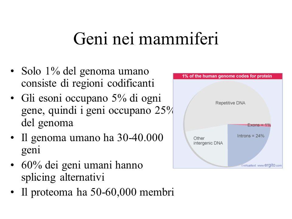 Geni nei mammiferi Solo 1% del genoma umano consiste di regioni codificanti.