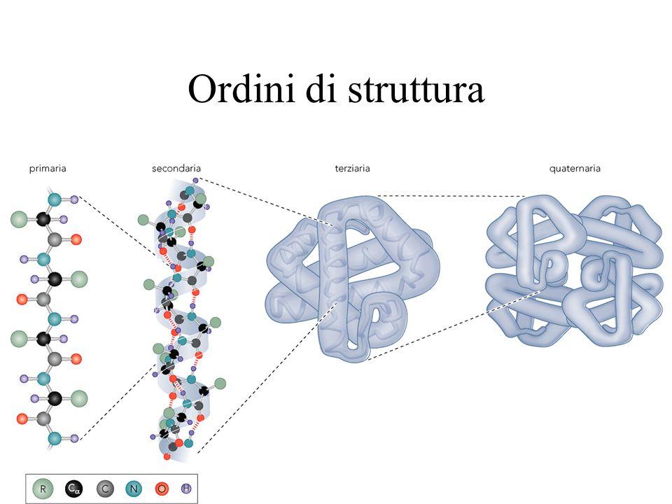 Ordini di struttura