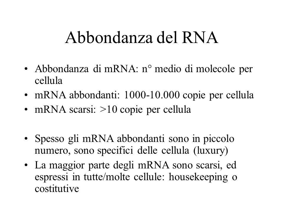 Abbondanza del RNA Abbondanza di mRNA: n° medio di molecole per cellula. mRNA abbondanti: 1000-10.000 copie per cellula.