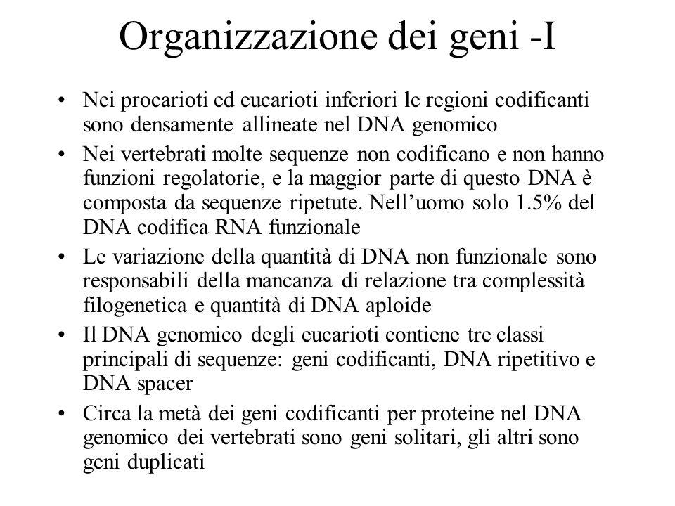 Organizzazione dei geni -I