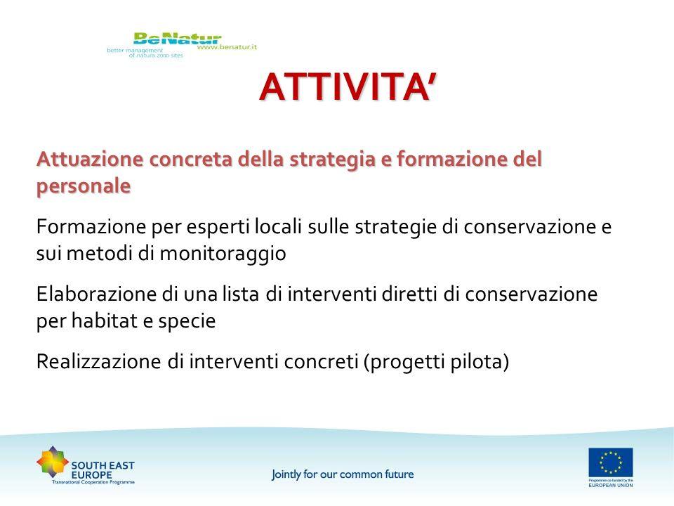 ATTIVITA' Attuazione concreta della strategia e formazione del personale.