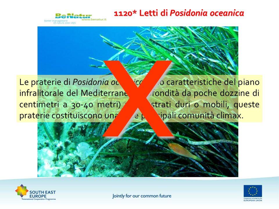 1120* Letti di Posidonia oceanica