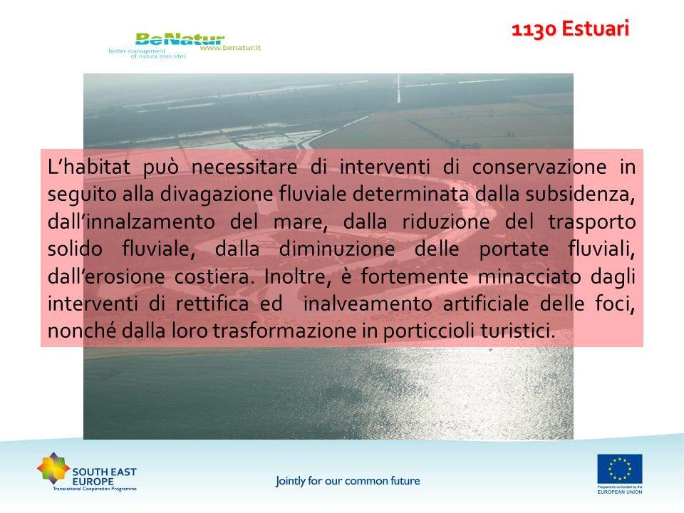 1130 Estuari