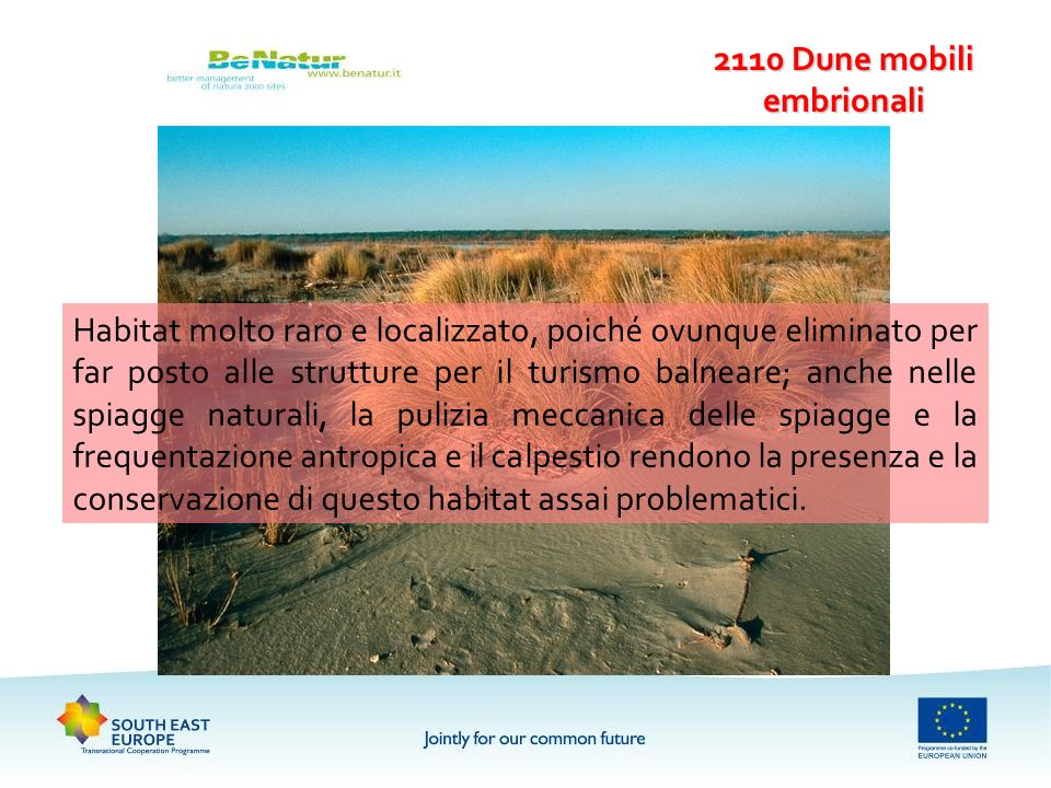 2110 Dune mobili embrionali