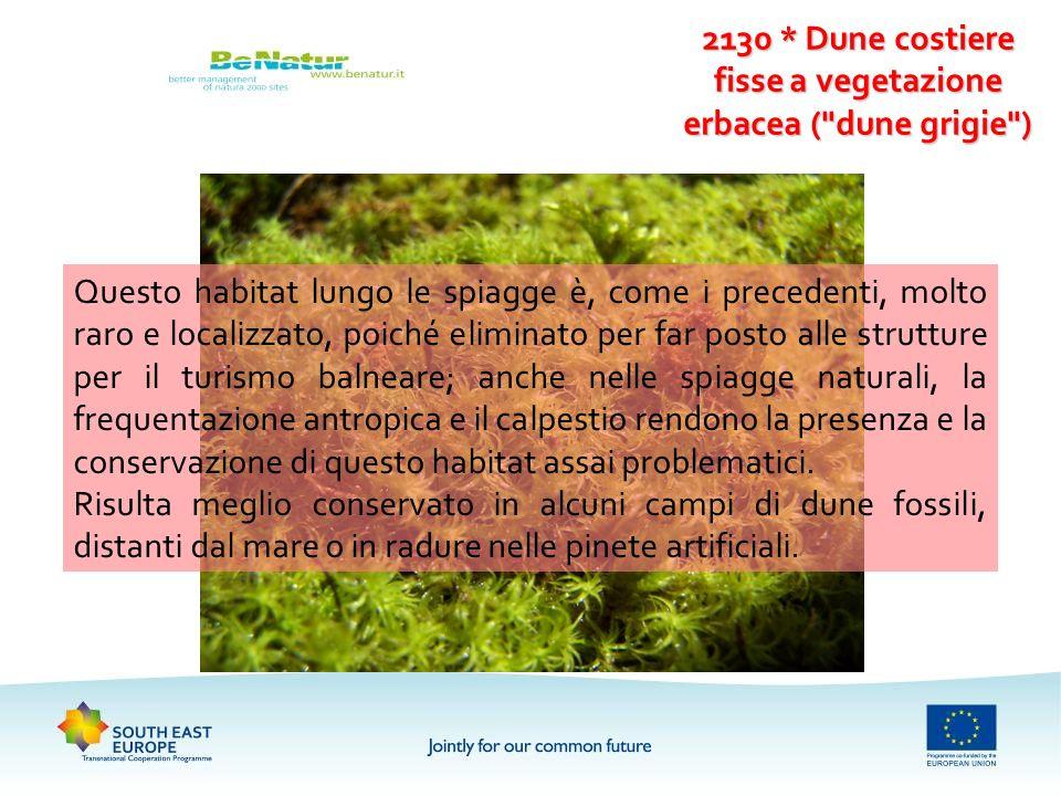 2130 * Dune costiere fisse a vegetazione erbacea ( dune grigie )