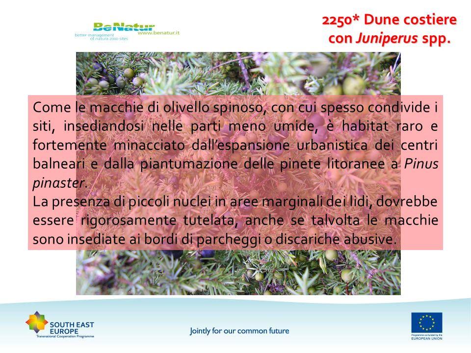 2250* Dune costiere con Juniperus spp.