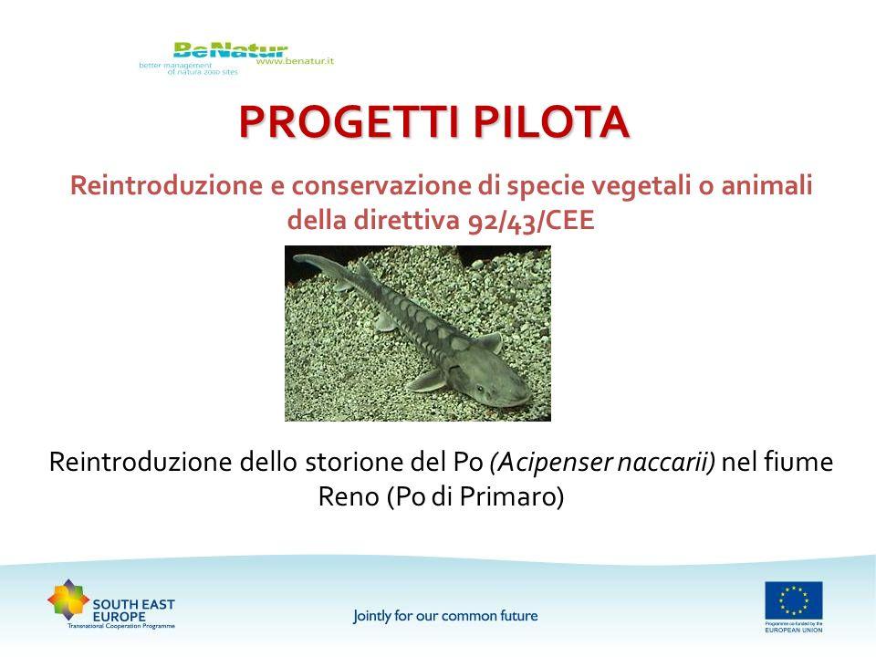 PROGETTI PILOTAReintroduzione e conservazione di specie vegetali o animali della direttiva 92/43/CEE.
