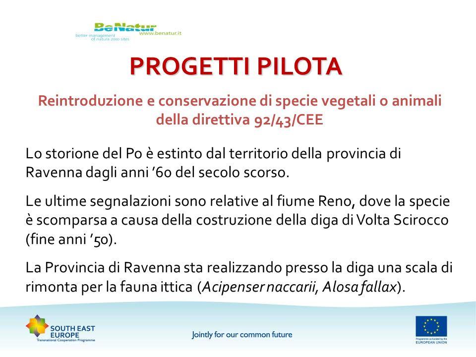 PROGETTI PILOTA Reintroduzione e conservazione di specie vegetali o animali della direttiva 92/43/CEE.